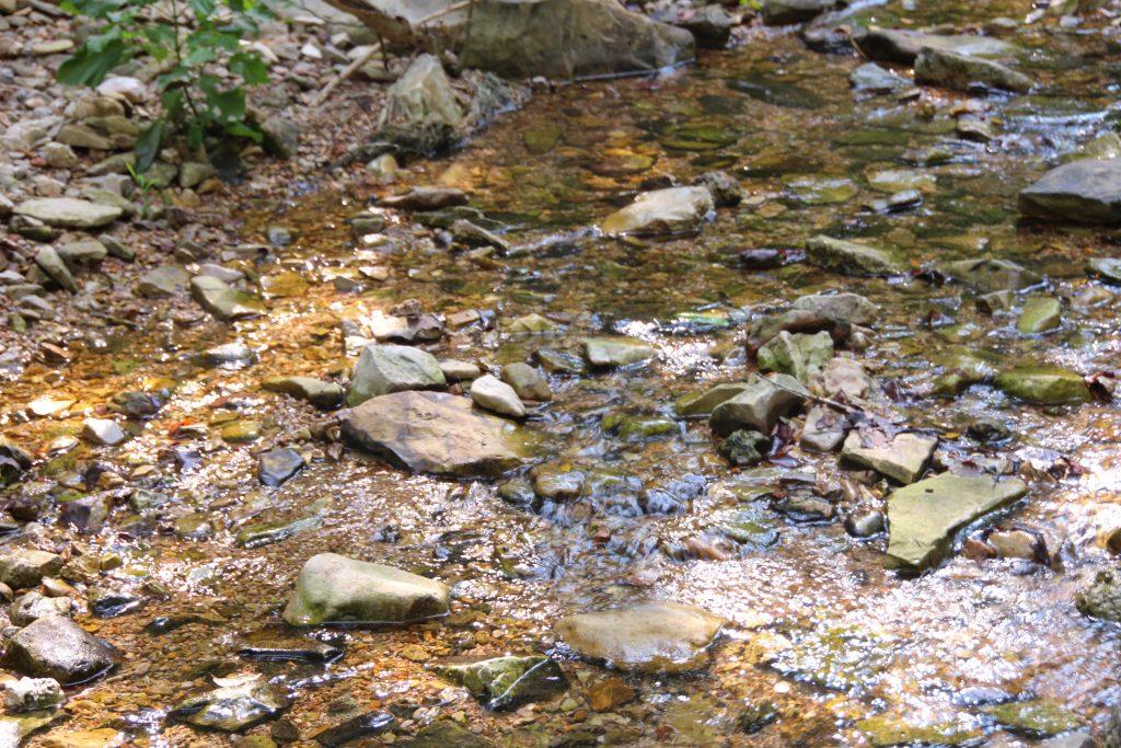 beautiful creek in branson